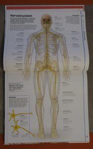 wissen mensch nervensystem