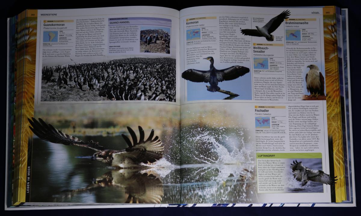 ozeane tiere